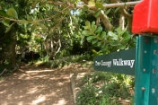 kirstenbosch botanical gardens tree canopy walk