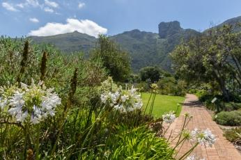 Kirstenbosch tuinen gardens kaapstad