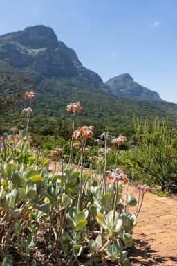 Kirstenbosch tuinen gardens