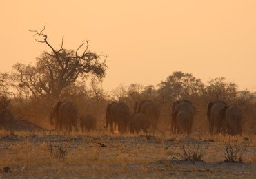 57_Elephants_retreating_evening_light_dust