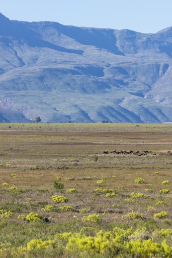 bontebok national park np